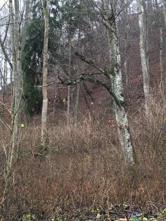 Trailrunnerwurm im Wald
